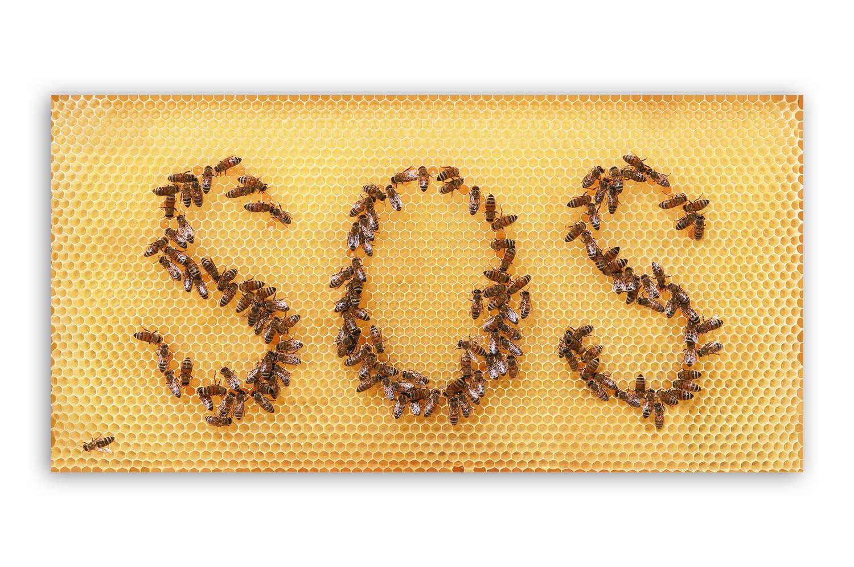 Geschenke für Imker: Poster mit Motiven aus dem Bienenstock
